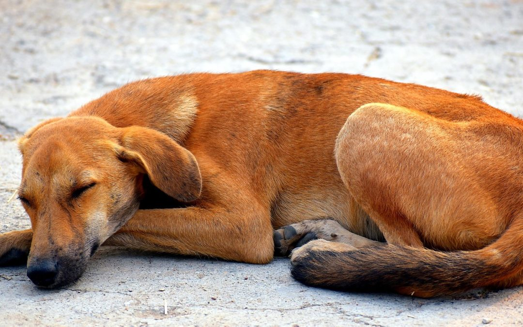Saving dogs to support rural communities